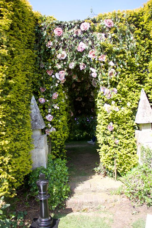 Talking Rose bush